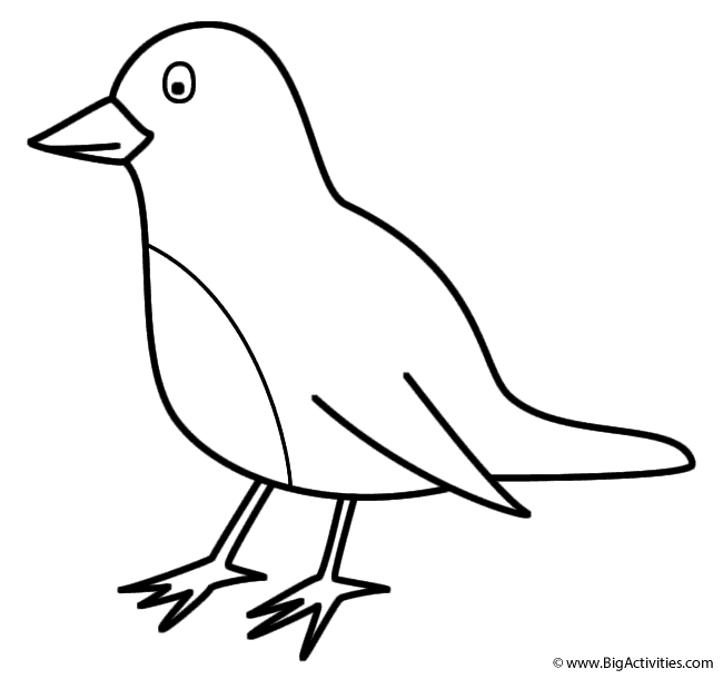 Robin Coloring Page Birds
