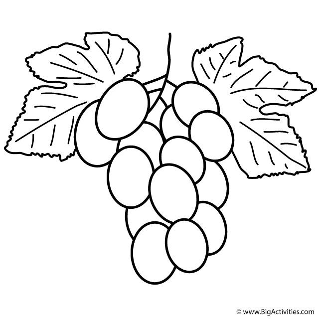 Grapes fruits and berries coloring pages for kids, printable free ... | 640x640