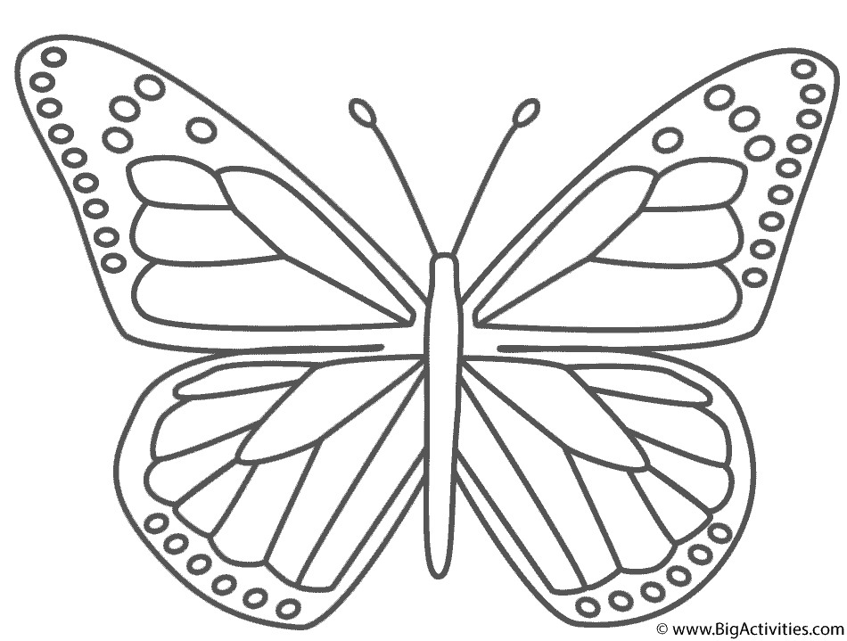 Monarch Butterfly - Coloring Page (Insects)