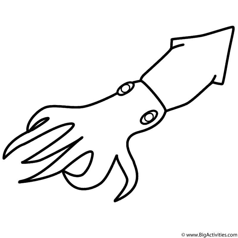 squid coloring pages Squid   Coloring Page (Sea/Marine) squid coloring pages