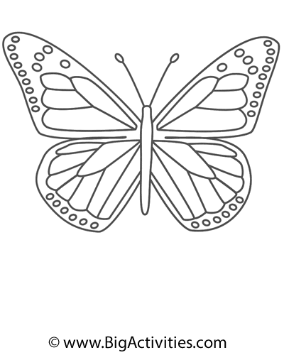 Butterfly Easy Word Search Monarch